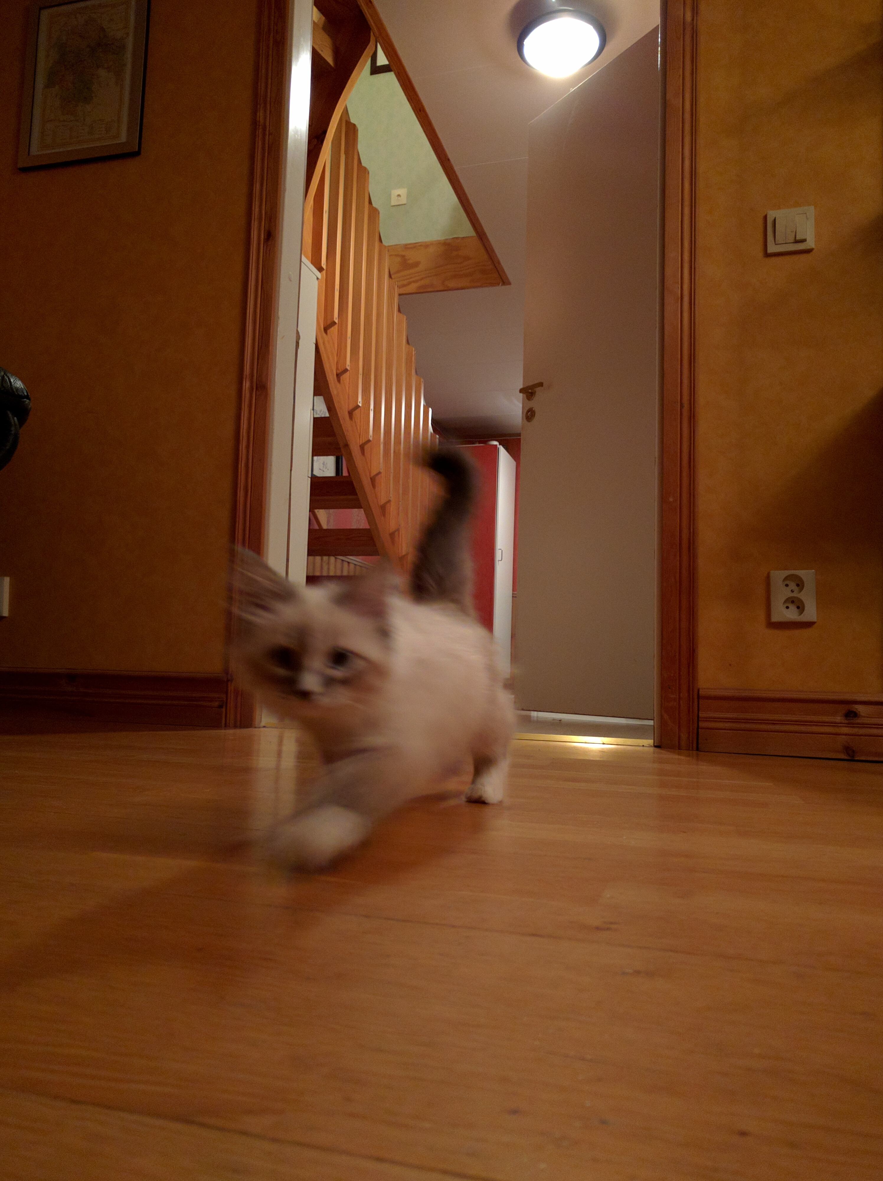 Yulia på språng